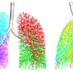 Simulation of Air Flowing in Lungs